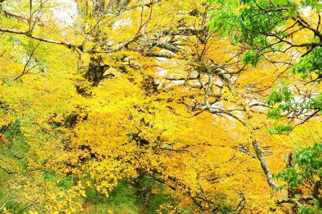 一叶知秋   白昼越来越短, 夜越来越长   秋天, 落叶树开始落叶
