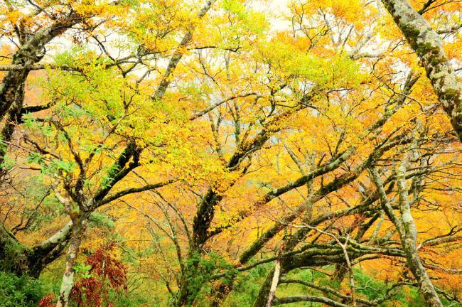 白昼越来越短, 夜越来越长   秋天, 落叶树开始落叶,   我醉了, 醉